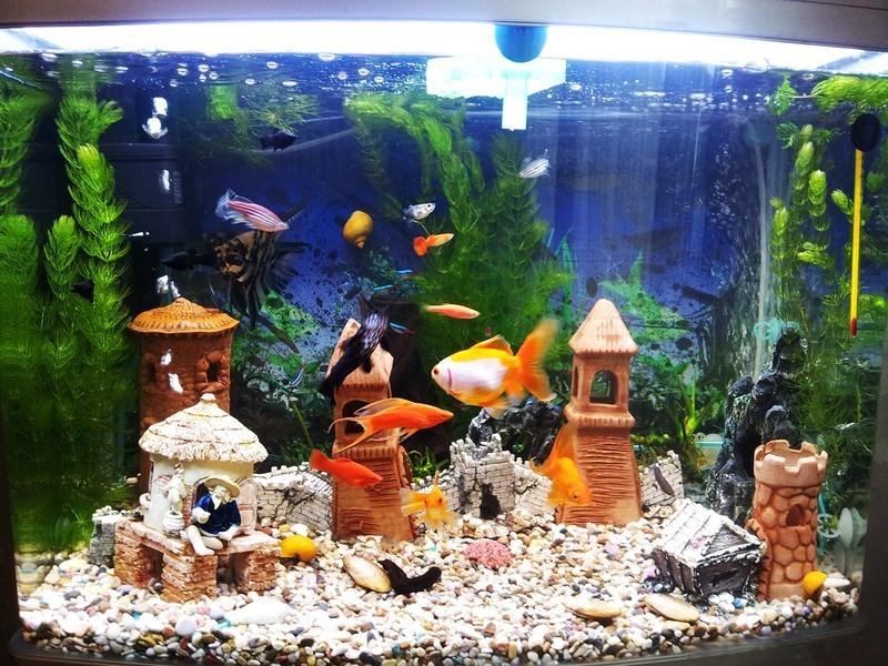 Купить Фитосветильник для аквариумов
